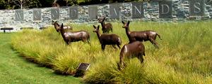 wdls_deer
